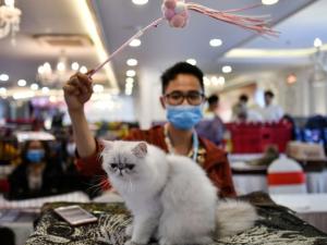 gato en laboratorio